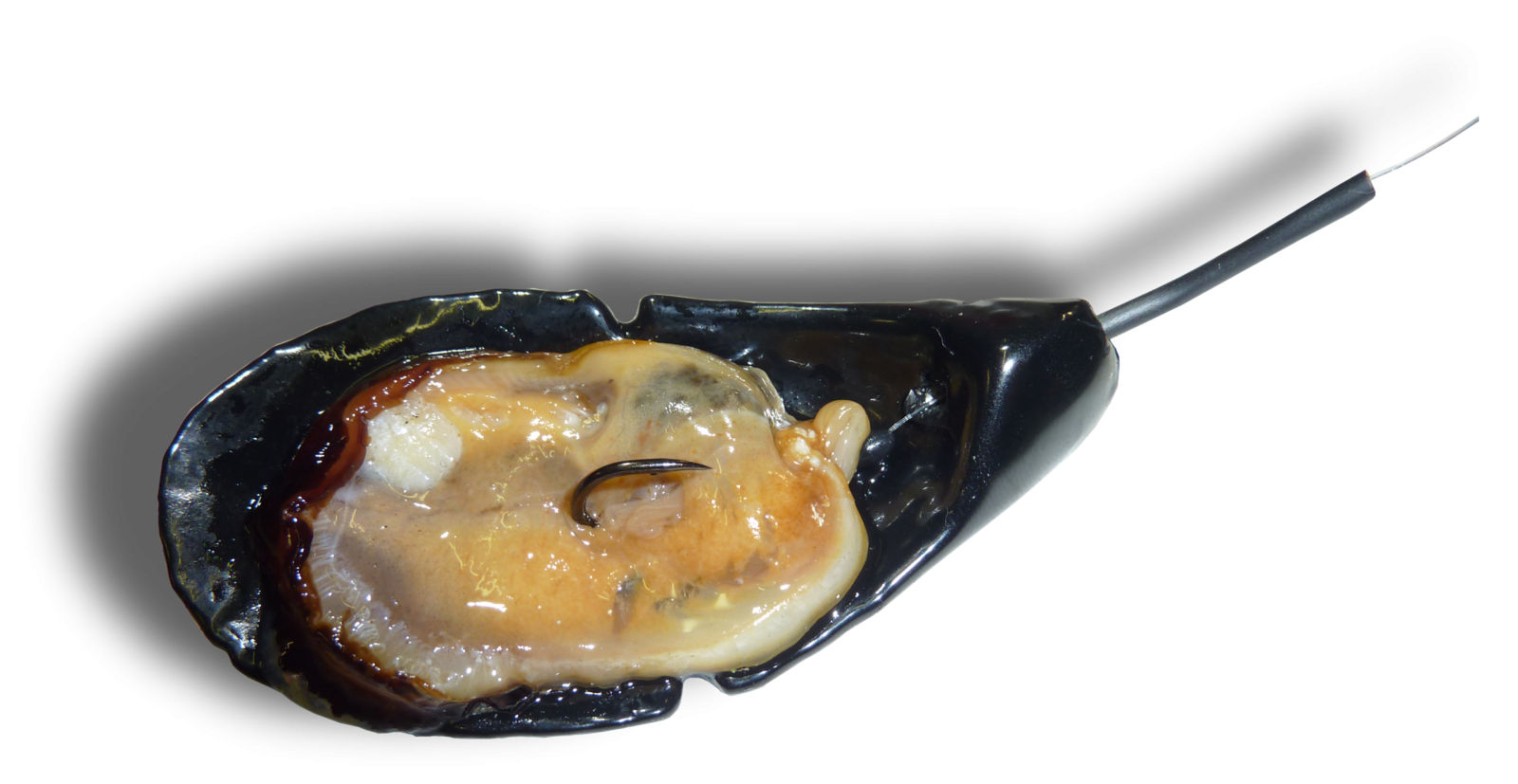 The Marseille Mussel Clamshell Lure